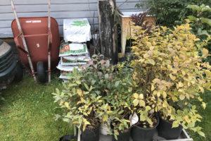1 Fall Shrub Planting Sept 7, 2018 IMG_2122
